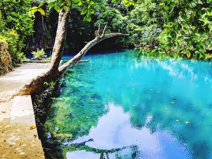 Tree Water Swimming Pool Reflection Sky Turquoise Branch Tranquil Scene Idyllic Lakeside Calm Remote Tree Trunk Tranquility Countryside Scenics