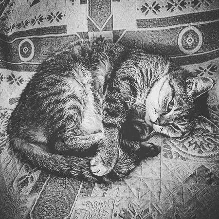 антидепрессант моя кошка люблюкошку калининград Cats Theanimals Kaliningrad домашниелюбимцы