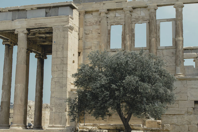 Parthenon Acropolis Ancient Ancient Civilization Archaeology Architectural Column Architecture Building Building Exterior Built Structure Colonnade Day History Low Angle View Nature No People Old Old Ruin Outdoors Plant Ruined The Past Travel Travel Destinations Tree