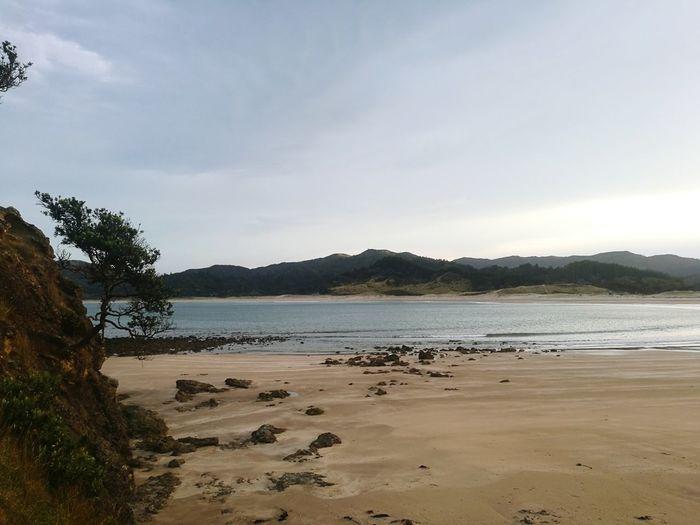 Beach Bay Sand Tree Rock - Object Water Low Tide Sky Scenics Landscape