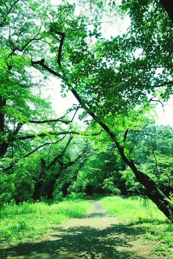 Road Reef Nature 爽やか 初夏 エメラルドグリーン Valley Earil Summer Tree Branch Forest Leaf Lush Foliage Sky Green Color Greenery Grassland Woods Spring Green