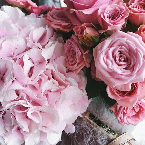 Pink Color Plant Flower Beauty In Nature Flowering Plant Freshness Rosé Full Frame Rose - Flower Vulnerability  Close-up Nature Petal Flower Head Flower Arrangement Fragility No People Backgrounds High Angle View Inflorescence