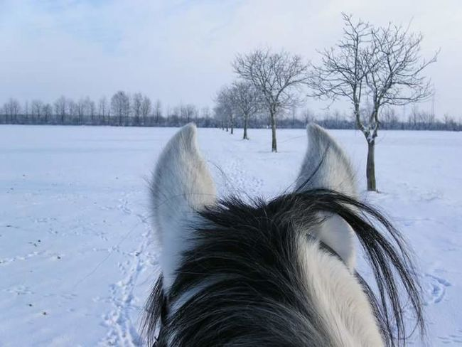 Today five years ago.... Hello World SnowRide Snowscape Horse Riding Nature Enjoying Life Taking Photos Pure Photo Hi! I Love My Horse My Horse Winter Wonderland That's Me