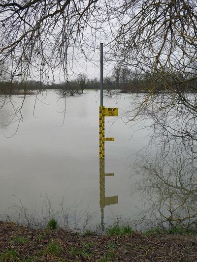Messung Landscape Riverside Flooding Measure Measurement Pegel Wintertime Winter Wasser Rheinaue Rheinauen Südpfalz Hochwasser Lauter Lautertal Water Reflection Flood No People Day Outdoors