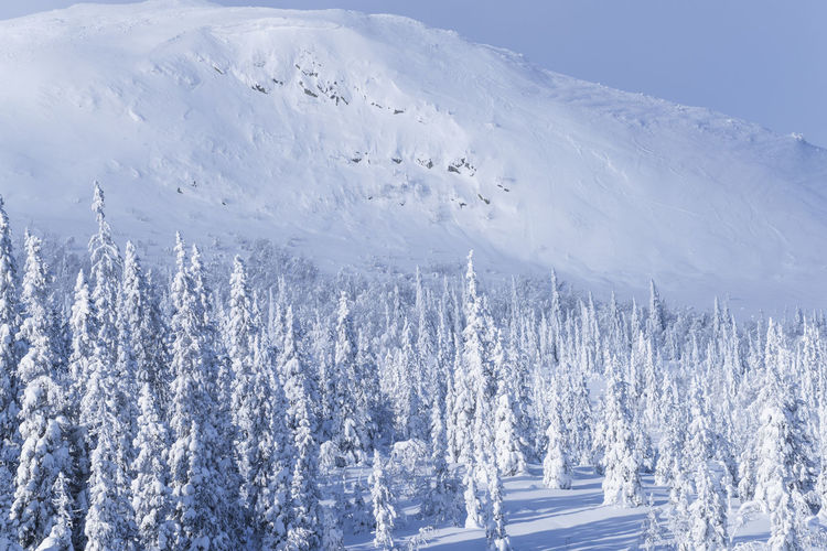 Panoramic shot of snow covered trees on landscape