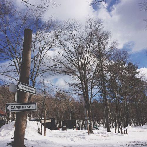 Tree Winter Snow Sky Nature Outdoors Walking Around