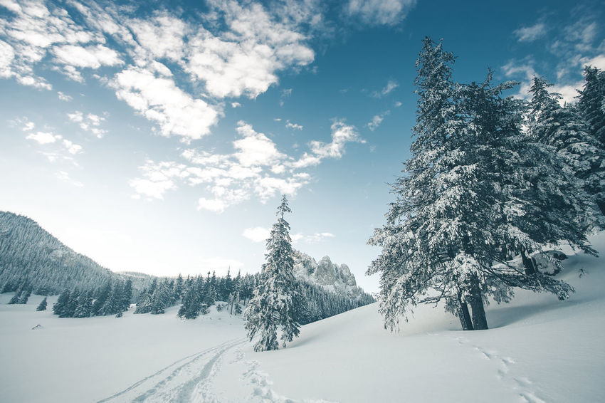 Beauty In Nature Cloud - Sky Cold Temperature Coniferous Tree Covering Day Environment Landscape Nature No People Non-urban Scene Plant Scenics - Nature Sky Snow Snowcapped Mountain Tranquil Scene Tranquility Tree White Color Winter