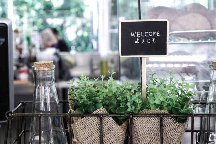Plant Plants Text Close-up Communication Counter Day Freshness Green Color Growth Order Plant Price Tag Retail  Tag Text Welcome Welcome Sign