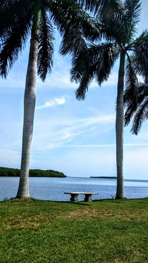 The favorite corner of my world, peace, open sea, palm trees swaying...happy.
