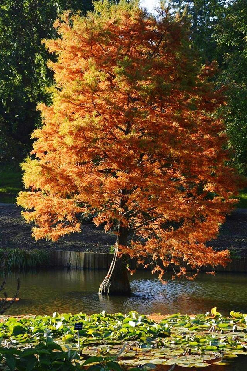 tree, autumn, leaf, nature, change, water, beauty in nature, tranquility, lake, growth, tranquil scene, no people, outdoors, day, scenics, reflection, sky