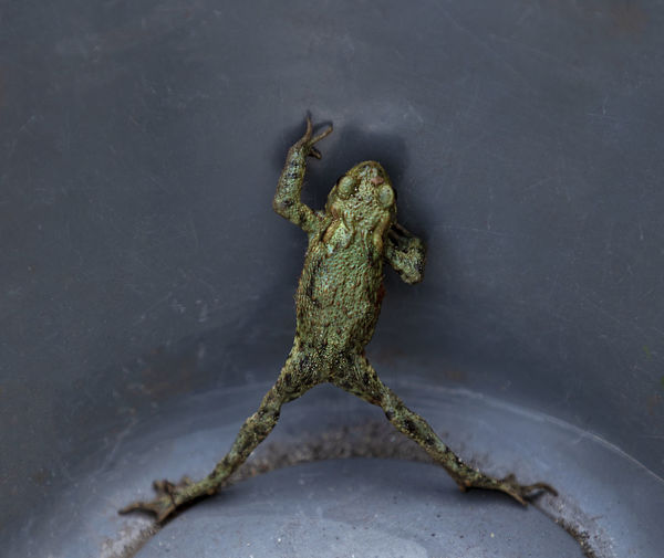Close-up of frog on metal