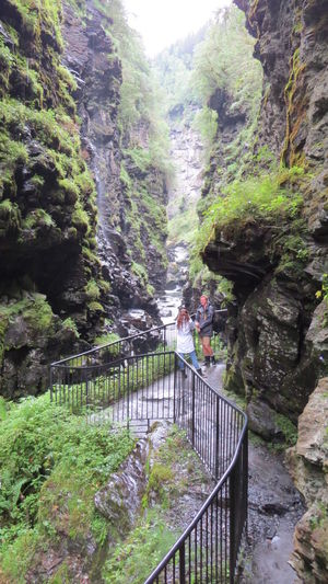Beauty In Nature Bordalsgjelet Day Footbridge Forest Gorge Green Color Growth Lush - Description Lush Foliage Nature No People Outdoors Railing Ravines & Gorges Scenics The Way Forward Tranquility Travel Destinations Tree Tree Area Trips Around The World VOSS