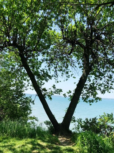 Tree view Plant Tree Nature Growth No People Sky Day Heart Shape Low Angle View Outdoors Green Color Branch Positive Emotion Beauty In Nature Water Love Silhouette Foliage Architecture