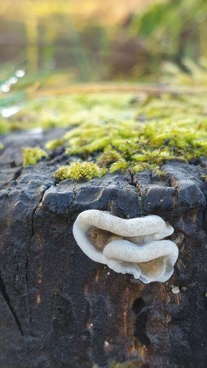 Folded mushroom