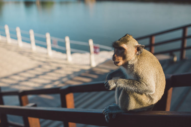 Siem Reap Cambodia Angkor Wat Temple Mammal Animal Themes Animal Primate One Animal Railing Monkey Animal Wildlife Sitting Animals In The Wild Focus On Foreground Vertebrate Nature Water No People Day Relaxation Outdoors Seat