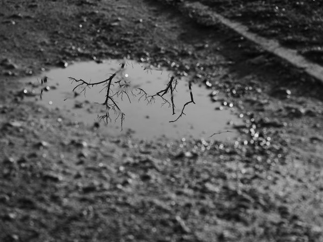 Monochrome Photography Water Reflections Branches Winter Nature Ground Focus