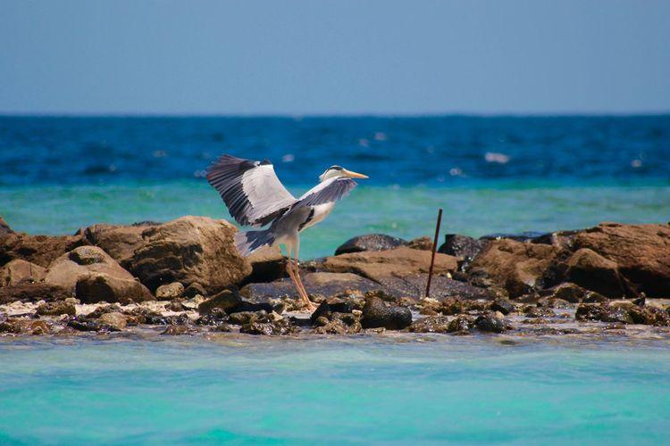 Grey heron perching on beach against sky