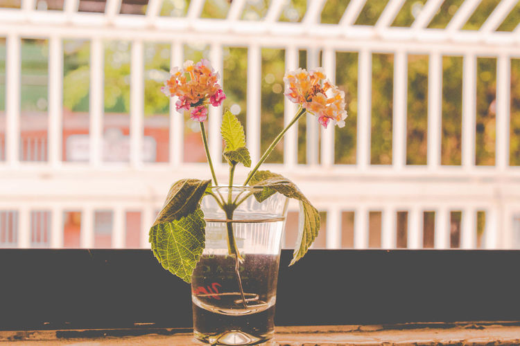 Love Culture Floral Beauty In Nature Close-up Day Drink Flower Flower Head Focus On Foreground Fragility Freshness Indoors  Nature No People Plant Refreshment Table Vase