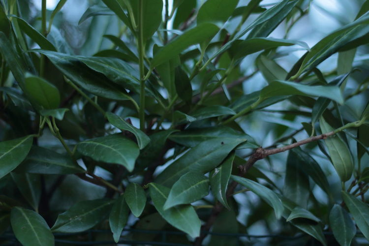 Beauty In Nature Close-up Day Freshness Green Color Growth Leaf Nature No People Outdoors Plant