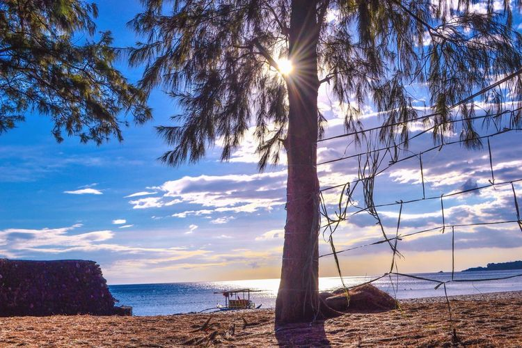 Vitamin SEA Sea Water Nature Sky Scenics Tranquil Scene Tree Tranquility Beach Beauty In Nature Sunlight Horizon Over Water Outdoors No People Tree Trunk Day Sun Sand Travel Destinations