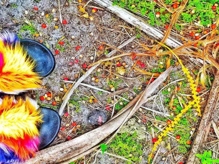 Nature Shoes Designer Shoes Fashion Stories Fashion Photography Fashion Still Life Street Style Bright Colors Bright Color Multi Colored Flower Backgrounds Full Frame Pattern Close-up Grass Flower Head Fabric Carpet