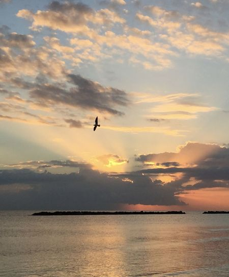 Silhouette bird flying over sea against sky during sunset