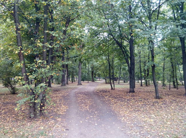 Seemingly non-stop autumn Autumn🍁🍁🍁 Sky Grey Skies Polytechnic Of Kharkiv Polytechnic Ukraine, Kharkiv Clouds Sun Sadness Fallen Leaves Fallen Leaf Outdoors Summer Passed