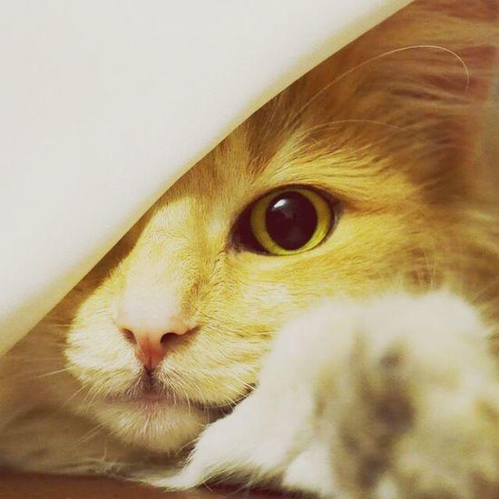 Cat My Cat Pets