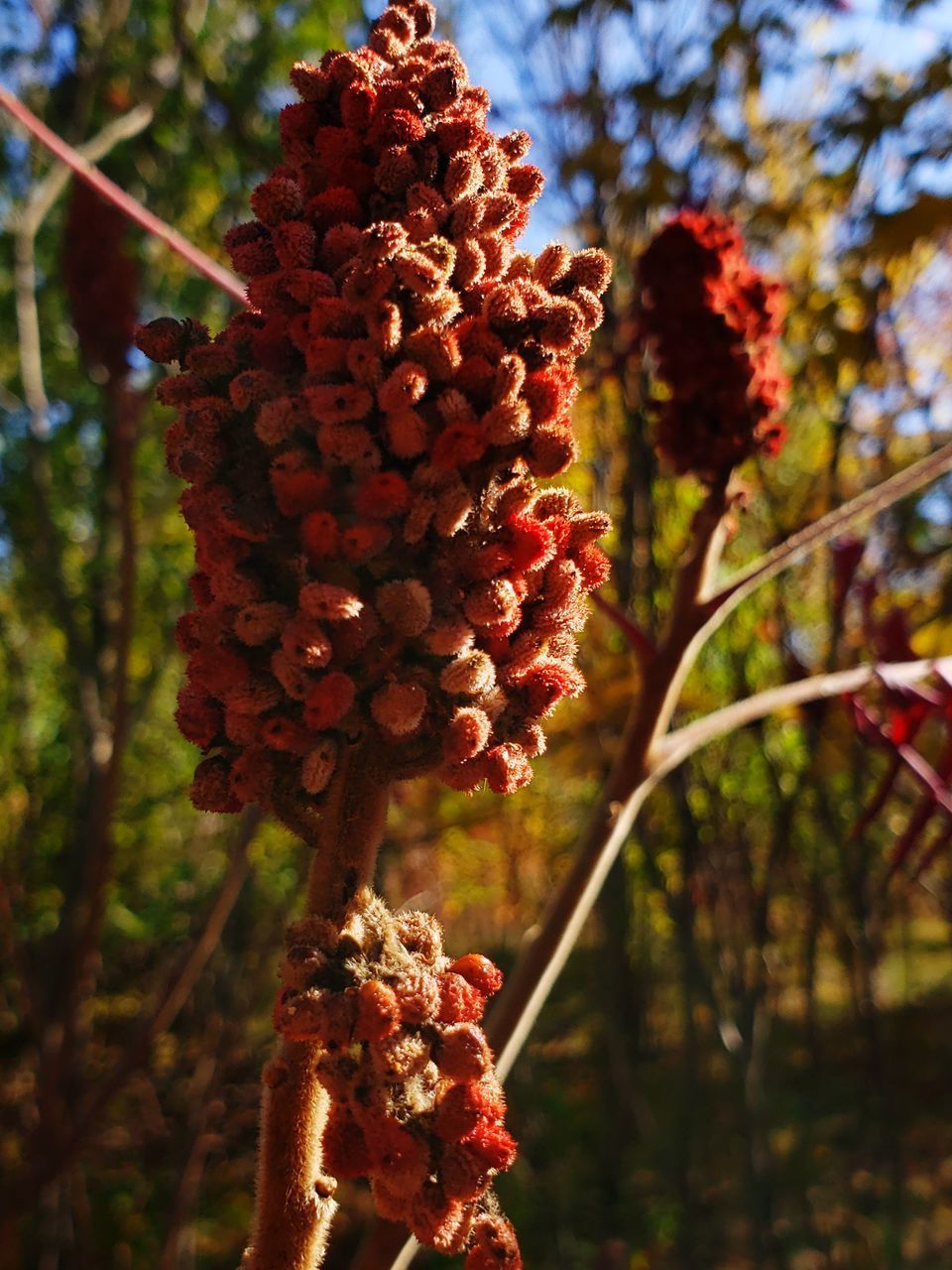 plant, focus on foreground, nature, close-up, growth, day, food, red, no people, beauty in nature, food and drink, freshness, fruit, healthy eating, tree, flower, outdoors, tranquility, bunch, flowering plant