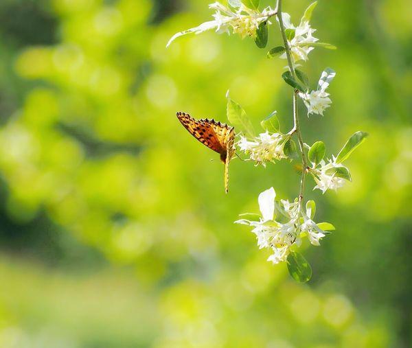 風に任せ… 思うままに… ヒョウモンチョウ 蝶々 Butterfly Butterfly Collection Butterfly - Insect Insect Collection 日だまり EyeEm Nature Lover EyeEm Best Shots EyeEm Gallery Eyemphotography My Point Of View Beauty In Nature Green Nature Taking Photos EyeEm Best Shots - Nature