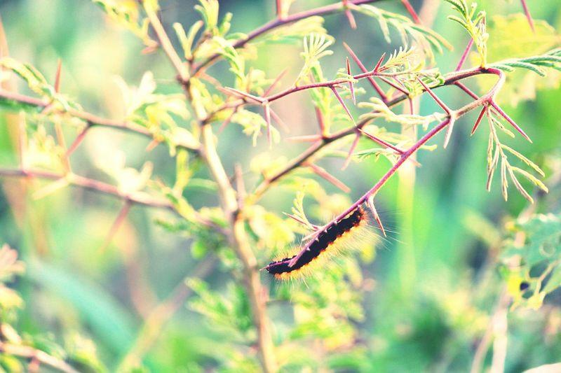 Centipede on plant stem