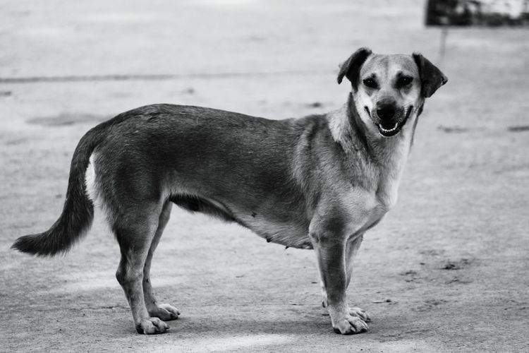 Animals Streetdog Pets Hungry! Adapted To The City EyeEmNewHere Adapted To The City Wine Moments
