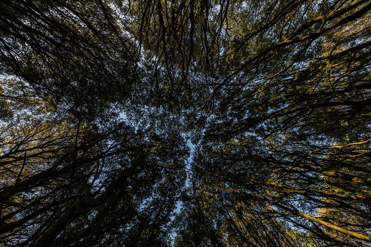 Trees Beauty In Nature Forrest Forrest Photography Full Frame Green Green Color Majestic Nature Nature Nature Photography Nature_collection Outdoors Scenics Sky Tall - High Tranquil Scene Tranquility Tree Tree Trunk Tree_collection  Trees Trees And Sky Treetop WoodLand WoodLand