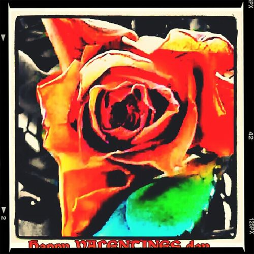 Happy Valentine's Day Galaxynote3 Galaxy Note3 & Eyeemediting Beautiful Rose ♡
