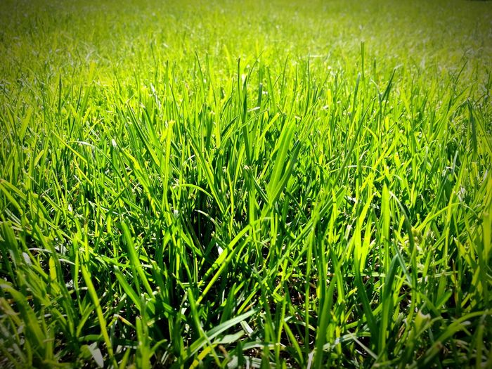 Grass Field Nature Green Sunny Day Life
