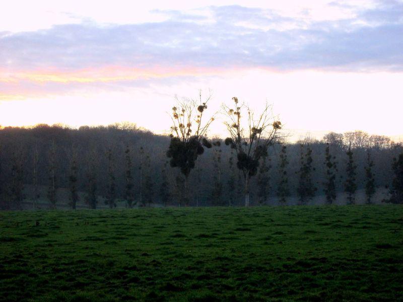 Naturephotography France Mistletoe Drseuss