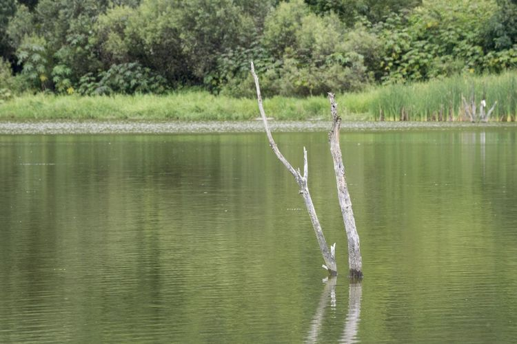 The branches of a dead tree protrude above the surface of a small lake in the community of Teremendo. Branches Teremendo Beauty In Nature Bird Day Lake Nature No People Outdoors Plant Reflection Scenics - Nature Tranquil Scene Tranquility Tree Vertebrate Water Waterfront