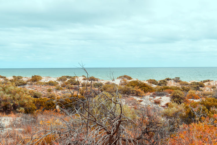 Tennyson Beach in Adelaide Sea Water Sky Horizon Over Water Horizon Scenics - Nature Beauty In Nature Tranquility Plant Tranquil Scene Cloud - Sky Nature Day No People Land Non-urban Scene Beach Growth Grass Marram Grass Adelaide