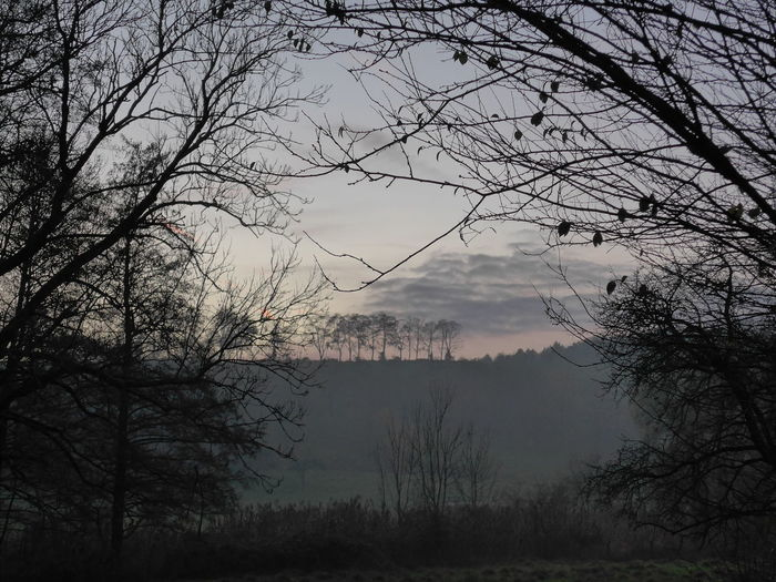 Maisbach Germany Nature November Cold Evening Fog No People Trees And Nature
