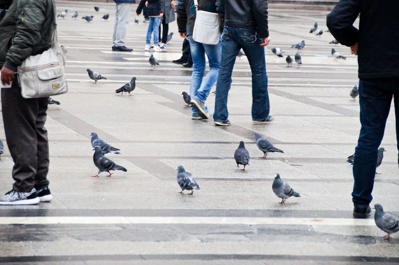 Low section of people with pigeons on footpath