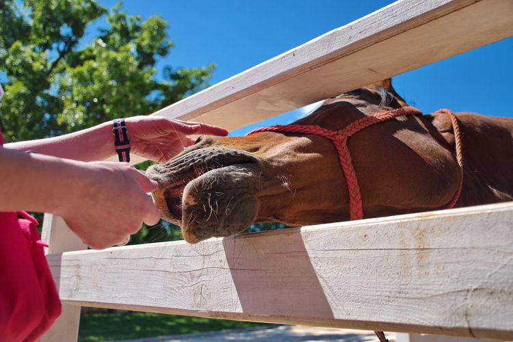 Closeup of horse in manege
