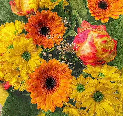 Flowerforfriends Floralperfection Eyeemflowerlover Colorful Flowers Streamzoofamily Streamzoofriends IloveHolland