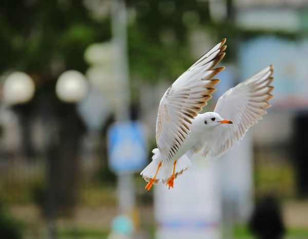 Flying Spread Wings Bird Nature Sochi Nature_collection Nature Nature Photography Gulls In Flight Gull EyeEm Selects Pet Portraits Go Higher