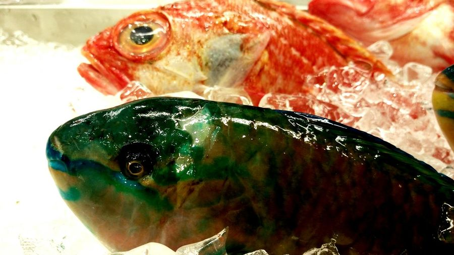 Seafood Dinner Fish Super Fresh Still Swimming Fishes Cold Temperature Ocean Life Life From Up There DEAD FISH Repicture Food Live Essentials Getting Creative SEAFOOD🐡 Seafoods Fresh Produce Visual Feast Food Stories