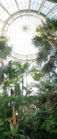Bronx Greenhouse Nature Plant Green Color New York City NYC Corpse Flower New York Botanical Garden Panorama Flower