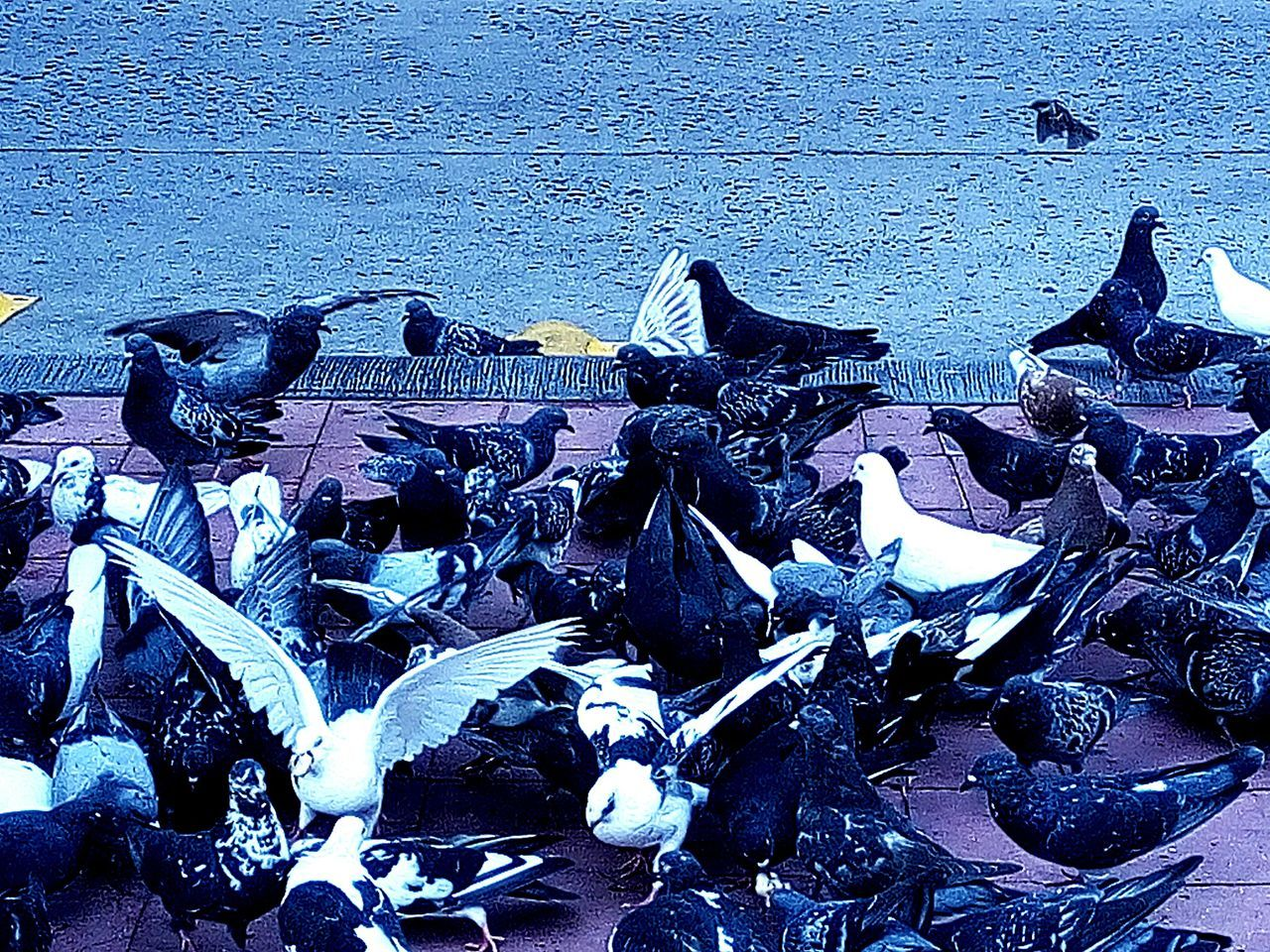 sea, large group of animals, animal themes, beach, animals in the wild, animal wildlife, no people, nautical vessel, outdoors, nature, water, day, bird, sea life, undersea, close-up, mammal