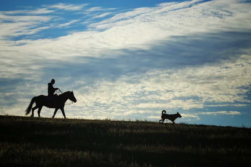 Grassland Abstract Horses Nature Photography Quiet Moments Travel On The Road The Great Outdoors - 2016 EyeEm Awards Landscape Morning Light Enjoying The View Landscapes Horse Riding Morning Blue Sky Silhouettes Silouette & Sky Horse And Rider Dog And Horses Cloudy Sky