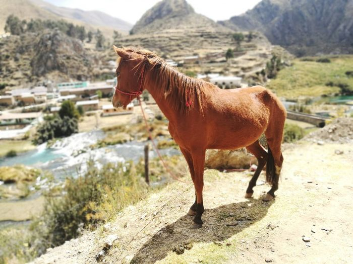 Horse standing on mountain