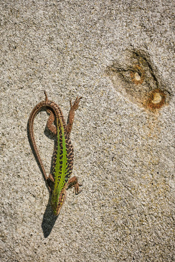 High angle view of caterpillar on wall