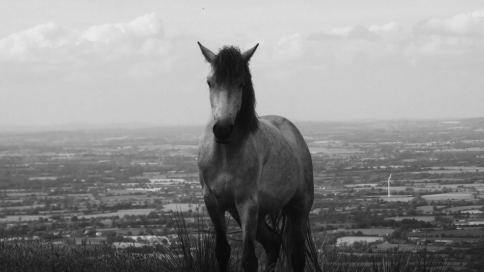 Standing Proud Ireland Horse Photography  Sky Standing Nature Landscape Beauty In Nature Beautiful Calm Blackandwhite Ireland Landscapes Animal Themes Animals In The Wild